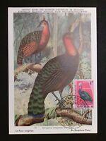 RUANDA MK 1963 VÖGEL VOGEL BIRD BIRDS MAXIMUMKARTE MAXIMUM CARD MC CM c8099