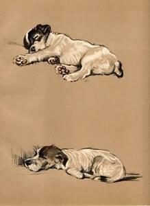 Fox Terrier 1936 Lucy Dawson Vintage Color Dog Print