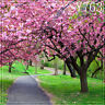Spring 10'x10' Computer-painted Scenic Photo Background Backdrop SY763B881
