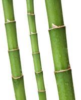 Winterharter Riesen Moso Bambus 100 Samen -Wächst Gigantisch Schnell-