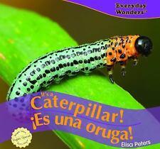 It's a Caterpillar! / ¡Es una oruga! (Everyday Wonders / Maravillas De-ExLibrary