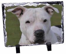 American Staffordshire Bull Terrier Dog Photo Slate Christmas Gift Or, AD-SBT5SL