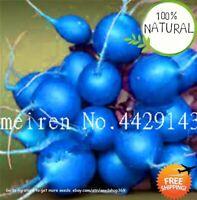 Bonsai Rainbow Colors Seeds Plants Radish Vegetable Juicy And Rare 200pcs