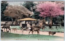 NARA, JAPAN  Handcolored  KASUGA PARK  Herd of Deer  ca 1910s  Postcard