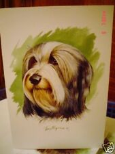Lovely Bearded Collie Blank Greeting Card