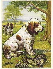 1952 Rare Dog Art Print Austria Tobacco Company Trade Card Clumber Spaniel