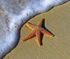 BEACH STARFISH OCEAN COMPUTER MOUSE PAD  7 x 9