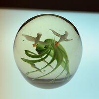 Art Glass Paperweight Flying Birds Swirl