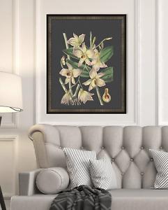 "Melissa Van Hise Botanical on Black Framed Giclee Wall Art (17"" x 21"" x 2"") 5993"