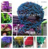 100 PCS Seeds Climbing Bougainvillea Bonsai Flowers Garden Plants Mixed Colors N