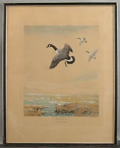 Antique ROLAND CLARK Hand-Colored Aquatint Etching DROPPING IN Canada Goose NR