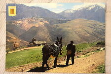 """CPM """" LUMIERE ET COULEURS DU ROUSSILLON - Scène paysanne des hautes Vallées"""