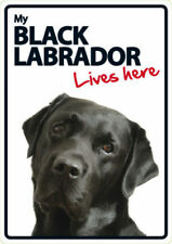 Labrador Retriever Warning Dog Warning Signs