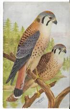 BIRD GUIDE #12 SPARROW HAWK,REED 1909