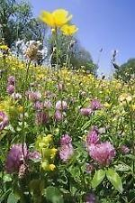 Wild Flower - Flowering Meadow Mix for Clay Soils 20g