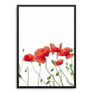 Poppy Flowers Kunstdruck ArtPrint Poster Druck Print Mohn Blumen Wiese Rot
