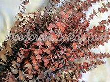 DRIED FLOWER PRESERVED RED SPIRAL EUCALYPTUS FRAGRANT FLOWER STEM