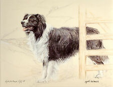 BORDER COLLIE WORKING SHEEPDOG DOG ART LIMITED EDITION PRINT Artist Proof # 9/85