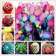 Cactus Bonsai Multiple Seeds Plants Ornamental For Mixed Beautiful 210pcs/bag