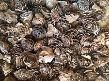 100 Cedar roses cedar rose pine cone Wood Wooden Rose