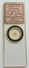 """VERY FINE ANTIQUE MICROSCOPE SLIDE """"VOLVOX GLOBLATOR WITH SPORES."""" BY SUTTER"""