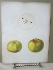 Vintage Print,APPLE,SLINGERLANDS PIPPIN, Natural History NY,1851