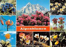 BT13361 Alpenblumen flowers in den bayerischen bergen           Germany
