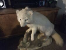 Grey Fox life size taxidermy