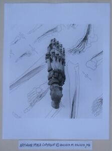 Photograph © Andrea Baldeck Gelatin Silver Print Art 'Footloose (Twinkle Toes)'