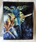 """~One of a Kind~ Blue Macaw Hand Painted Tile Art  8' x 10"""""""