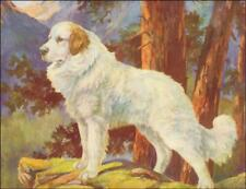 Pyrenean Mountain Dog by Nina Scott Langley, vintage print authentic 1935*