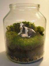 Mature 7x7 cm Moss For The Art Of Penjing / Penzai (Miniature Live Landscapes)