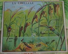 Old Map set de table Métamorphose de la Larve à la Libellule Insecte Parfait