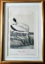 c1856 Framed WOOD IBIS Plate 361 J.T. Bowen Colored Lithograph of Audubon NR
