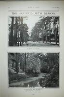 1903 PRINT SYLVAN SCENE BOURNEMOUTH ~ ROAD TO BOSCOMBE