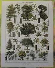 Ancienne Gravure Larousse 1950 Art Print on Original Antique Book Page Houx Buis