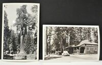 Vintage Grant Grove Village California Tree Cafe Old Cars RPPC Postcard Lot Of 2