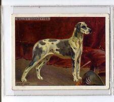 (Jv945-100) Wills, Dogs,Great Dane,1914 #23
