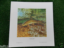 Fish Print  BARBEL ROYALTY GOLD  24 X 25  FISHING ANGLING