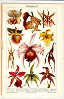1897 Orchids,Orchideen Antique Chromolithograph Print