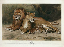 ROSA BONHEUR Antq 1883 UltraRare Lrg Hand-colored Engraving THE LION AT HOME !!!