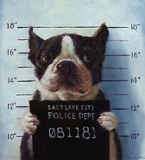 FUNNY BOSTON TERRIER MUG SHOT JOKE POSTER 20X22 INCH
