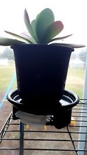"""POTTED PLANT DOLLY Water Tray 7.5"""" Diameter Heavy Duty Move Houseplants USA"""