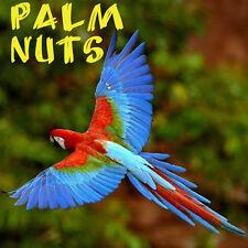 ~PALM NUTS~ Wodyetia bifurcata 85 BIG PARROT MACAW ORGANIC TREATS FRESH SEEDS