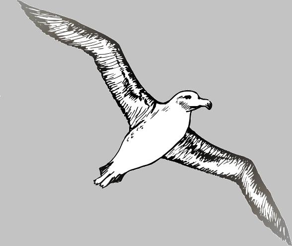 Albatross Golf NW
