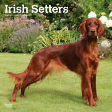 Irish Setters 2020 Square Wall Calendar by Browntrout Free Post