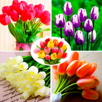 100 PCS Seeds Different Colors Dutch Tulip Flowers Bonsai Plants Home Garden New