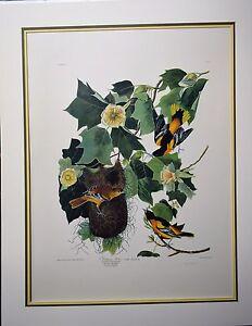 JOHN AUDUBON BALTIMORE ORIOLE HUGE  PRINT WITH  PLATEMARK  No 3  Plate 12