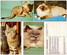 Set lot 4 pcs Cat Kitten Pc post card 1970th feline unused France Paris Lovely!