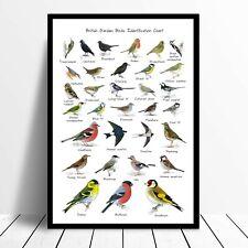 British Garden Birds Identification Chart Wildlife Poster A4 A3 A1 Framed Option